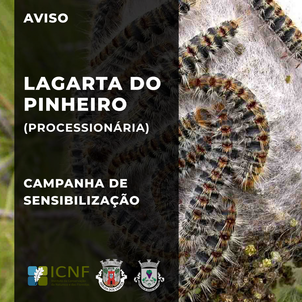 Lagarta do Pinheiro | Campanha de Sensibilização